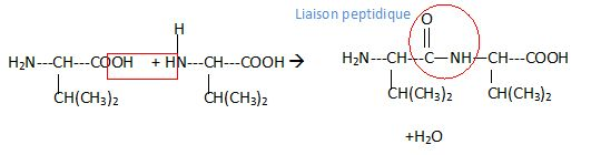 acides amin s valine iso leucine acide lactique dosage de l 39 aspirine bac st2s polyn sie 2013. Black Bedroom Furniture Sets. Home Design Ideas