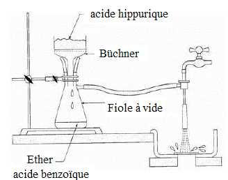 synth se de l 39 acide hippurique olympiades chimie. Black Bedroom Furniture Sets. Home Design Ideas