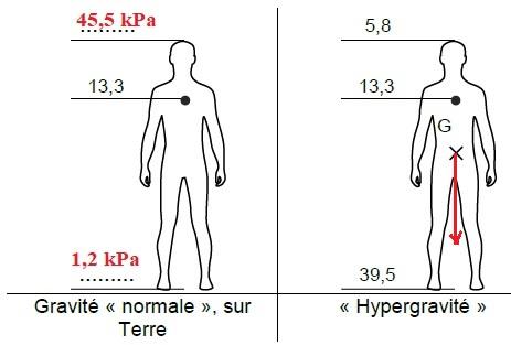 La scopolamine, la leucine, hypergravité, bac St2S..